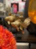 goldfish-riverdale-barberaslifestyle.jpg