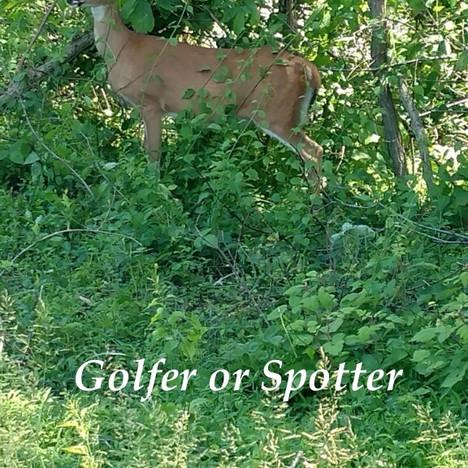 Deer the Spotter.jpg