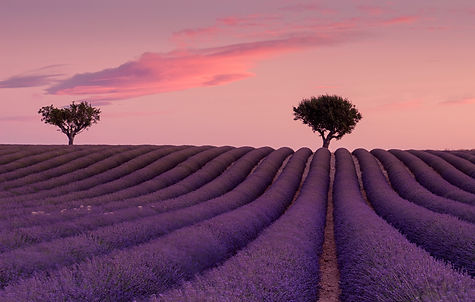 Sunrise, lavender field France. NiSi V5