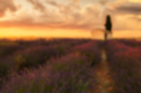 Provence Photography Workshop