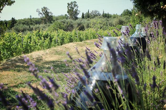 Vino criado al sol en dama-juanas, Vignoble Rasse, Costa Azul, viñedo, Rasse, Saint-Jeannte, vino solarizado, vino tejado, Rasse