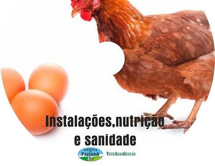 Galinha-600x600_edited.jpg