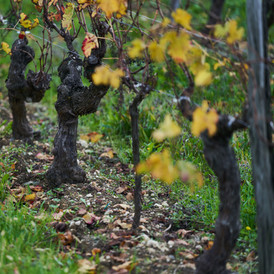 La vigne en automne