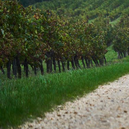 Allée de vignes (Parcelle Marnière)