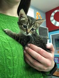z Cute kitten 1.JPG