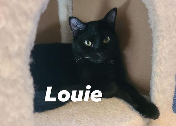 Louie_edited.jpg