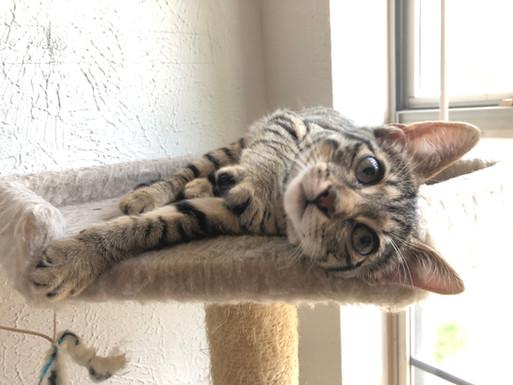 z Cute kitten 5.jpg
