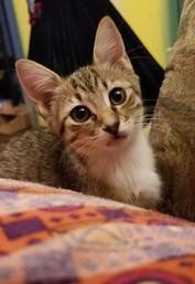 z Cute kitten 7.jpg