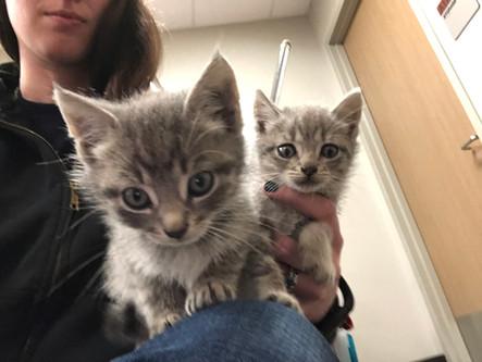 z Cute kitten 2.jpg