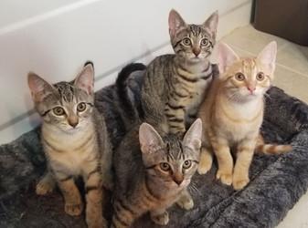 z Cute kitten 6.jpg