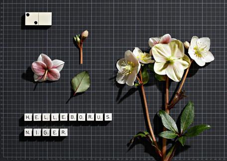 Botanische Tafeln