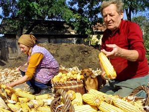 Agricultura trece pe online