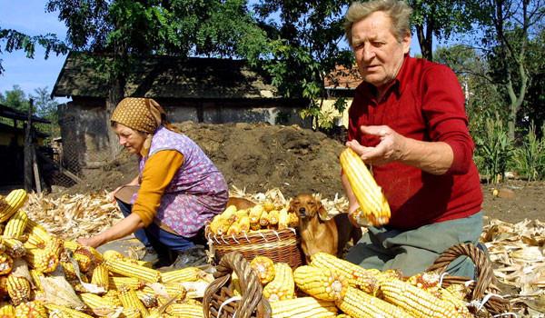 agricultura trece pe online.jpg