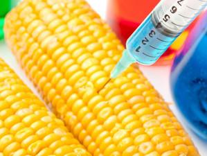 Plantele modificate genetic