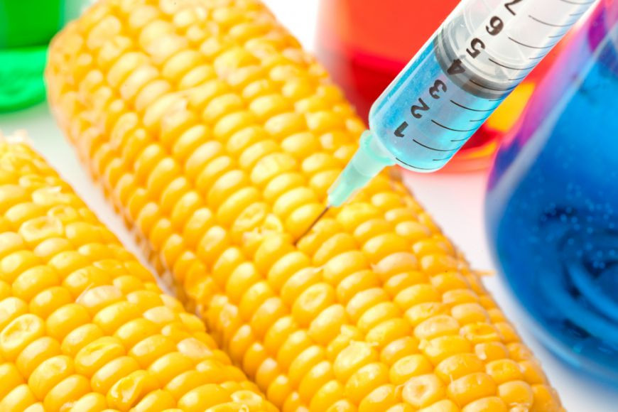 organismele modificate genetic.jpg