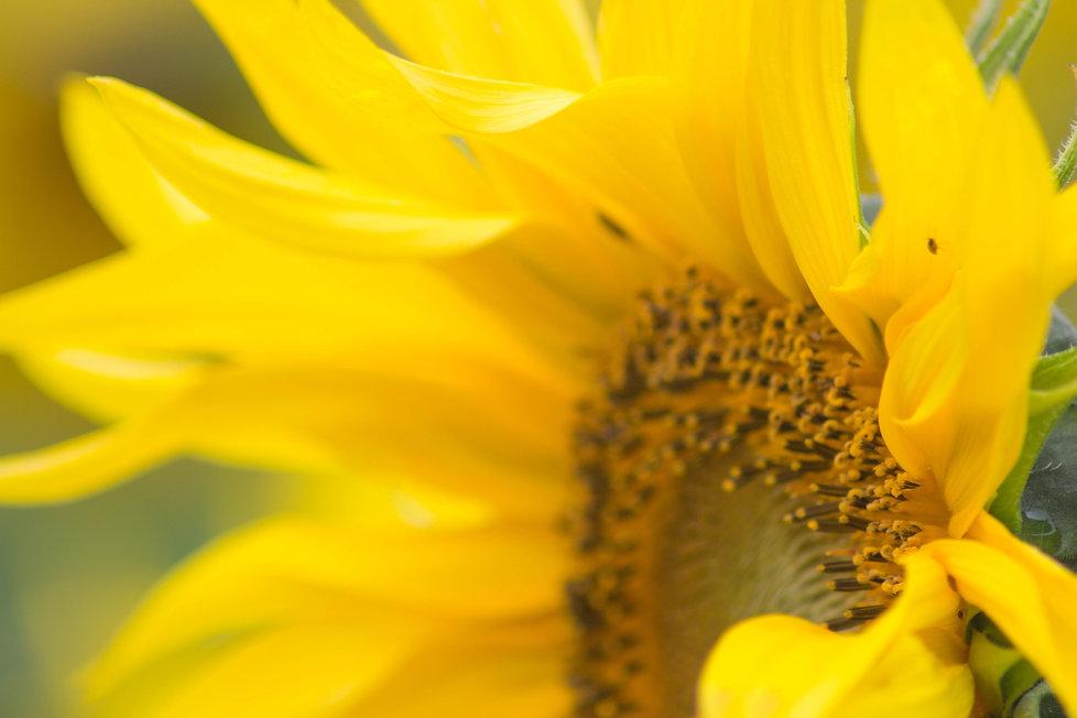 charlotte-coneybeer-536104-unsplash.jpg