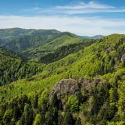 Forêt des Volcans