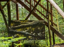 Sous bois, sous la cabane