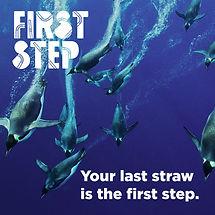 First Step_penguins.jpg