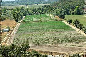 Eddy Lepp's farm.jpeg