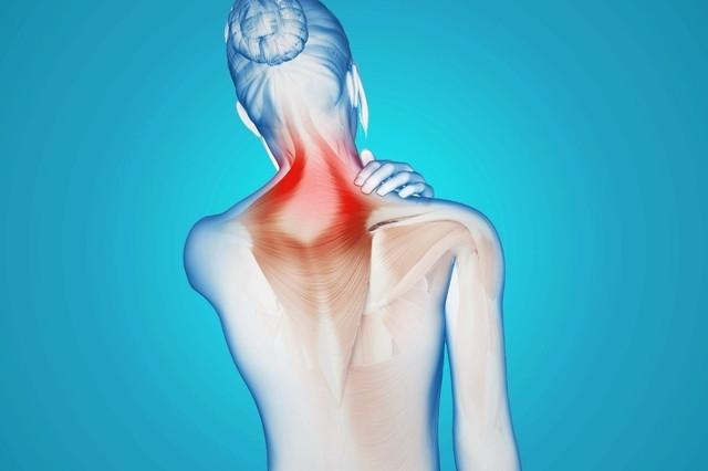 Maux chroniques, stress ou manque de flexibilité: et si la solution passait par le tissu conjonctif, ce «squelette mou» longtemps ignoré?