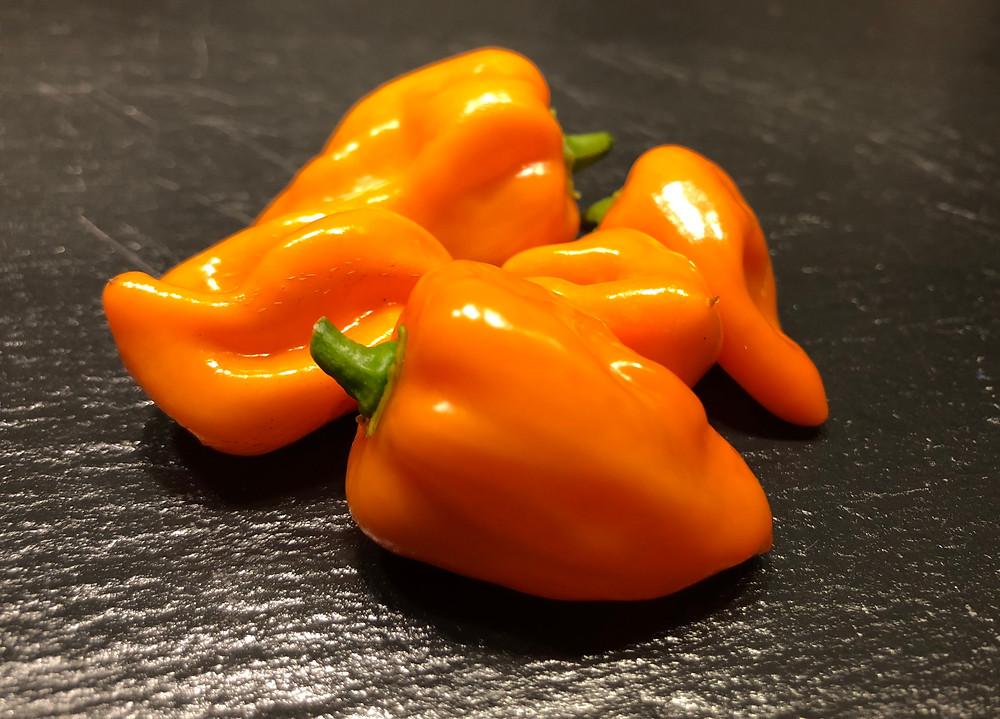 Chili Capsicum annuum Habanero Capsaicin Vitamin P