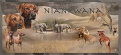 Banner Niankwana2.jpg