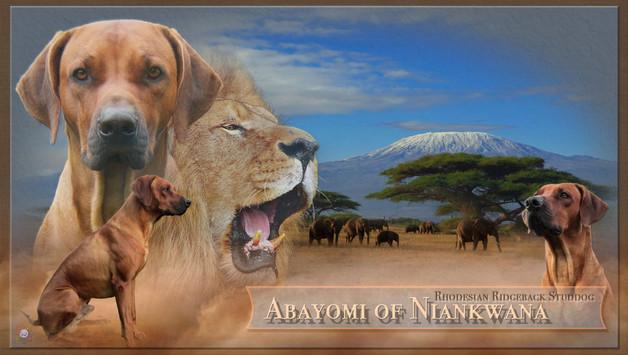 abayomi.jpg
