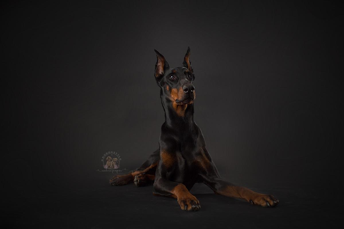 hundefotograf_tierfotograf_bulli_hundesh