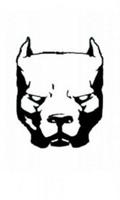 Pitbull-Logo-Wallpaper-Pitbull-Logo-1189