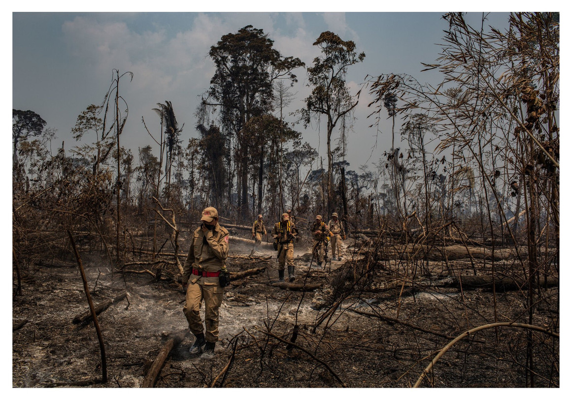 reforesting the deforested