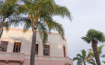 Napier-pink-art-deco-building-and-palm-trees--scaled.jpeg