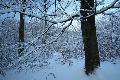 hutning in poland