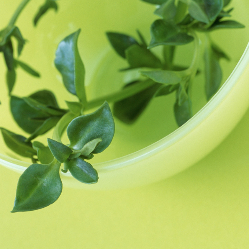 clipart cup of tea hanging herb - Copy - Copy