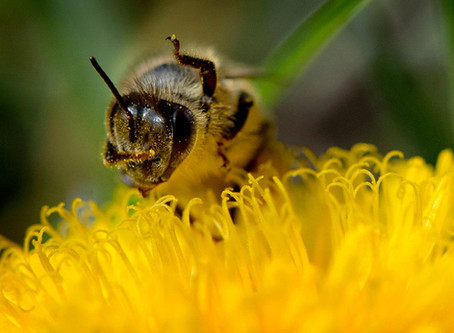 Bees Help Feed the World