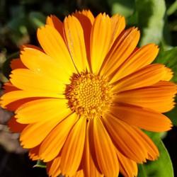 Flowers all winter