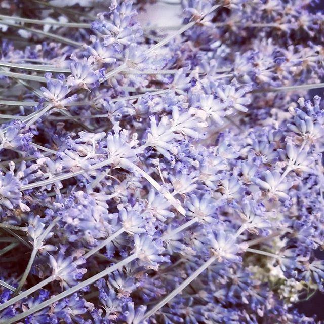 Fresh dried lavender.