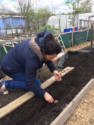 Plot 6B - Planting Potatoes