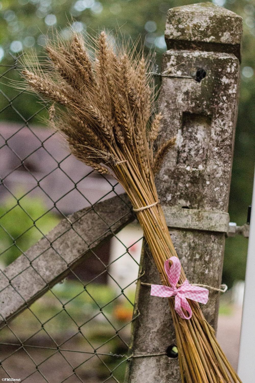 Le blé, un incontournable pour une décoration champêtre