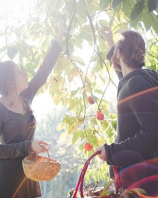 Cueillir des fruits