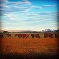 _petroffquarterhorses #aqha #western #ra
