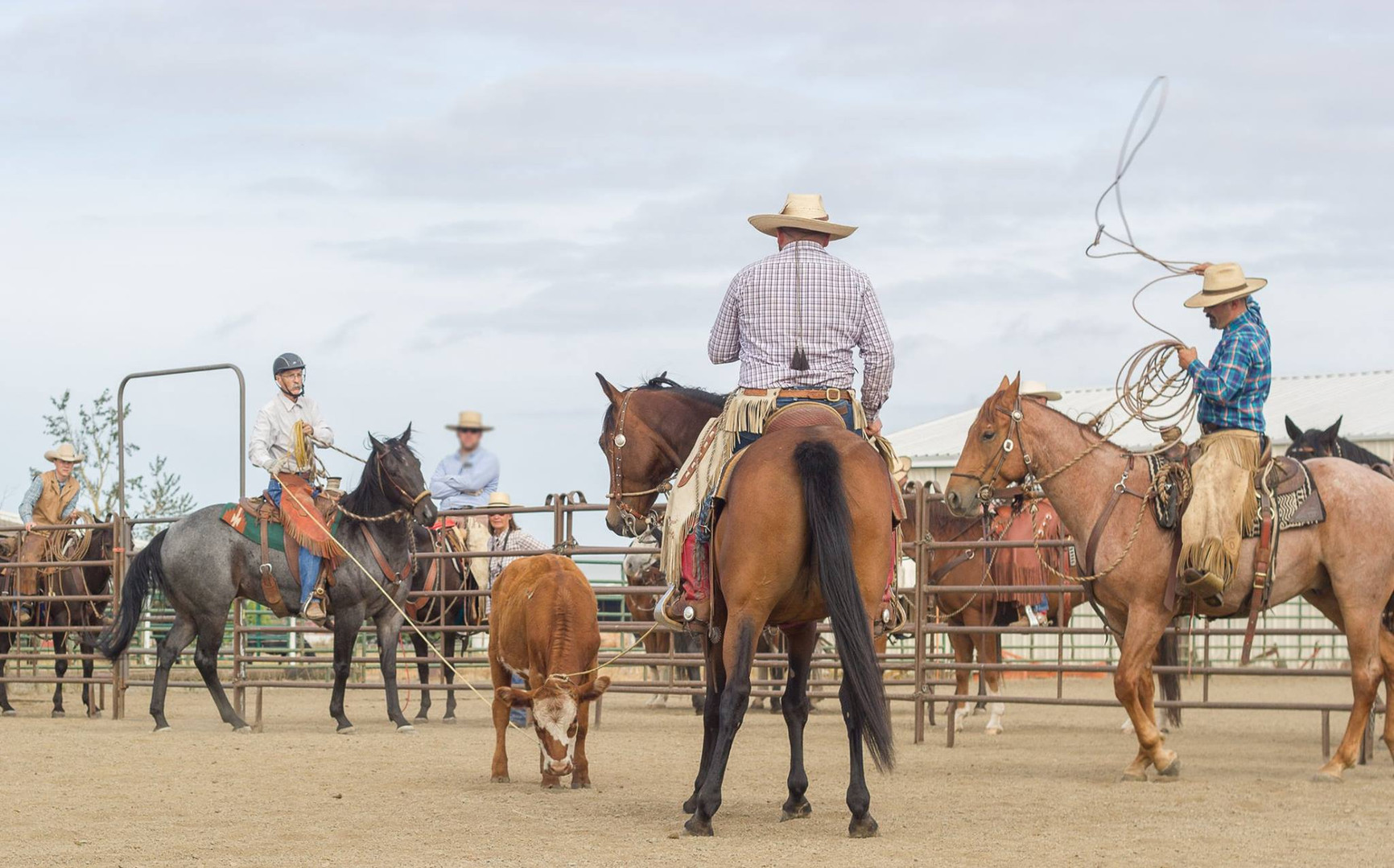 Cricket (Ranch Roping)