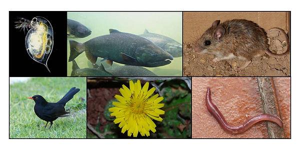 Six Species.jpg