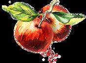 Äpfel.png