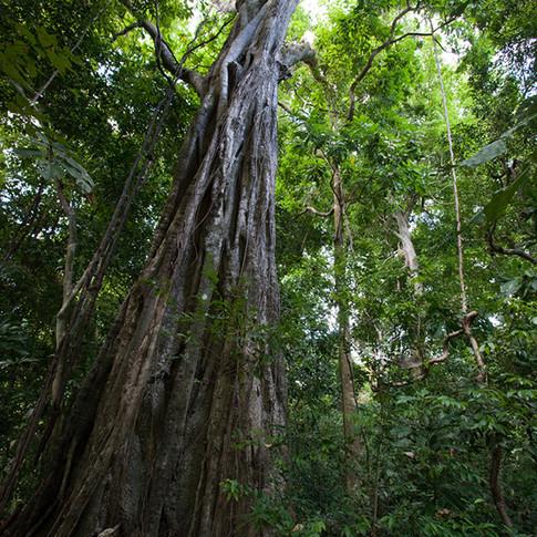 sacred tree.jpg