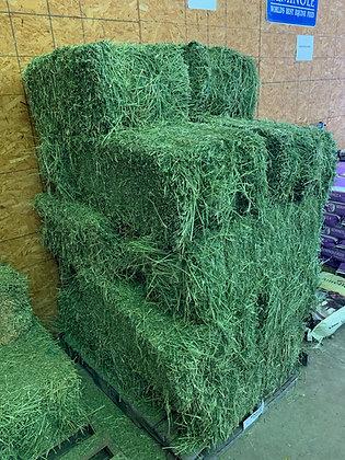 Alfalfa Hay-Bale