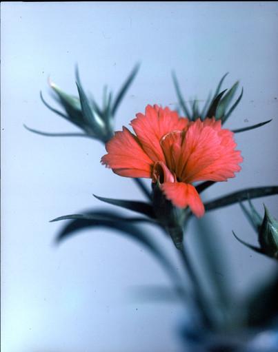 flower3012.jpg