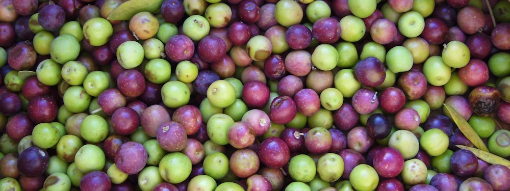 OliveOil-Arbequina