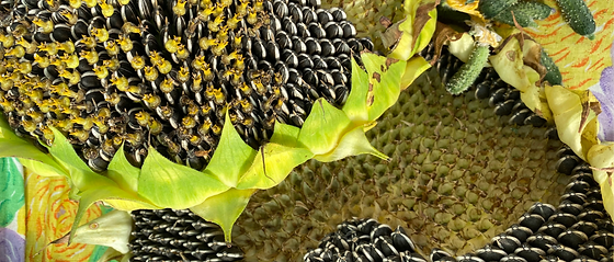Extreme close up of sunflower with its seeds and gherkin cucumbers.