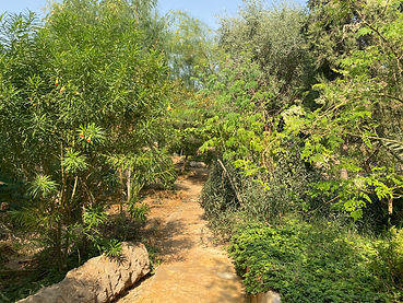 Lush trees in a garden in the Greening the Desert Project.